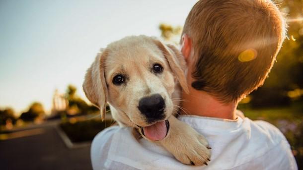 Aspectos a considerar sobre la Tenencia Responsable de Mascotas